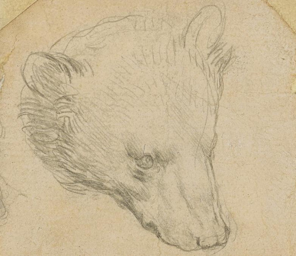 Léonard de Vinci, croqueur d'ours, pour 14 millions €